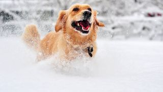 Protecting your pets from bitter cold temps
