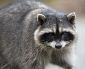 Beware: wild animals may have rabies