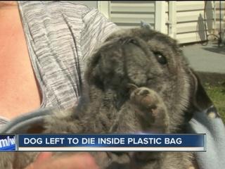 Girl rescues dog left to die in plastic bag
