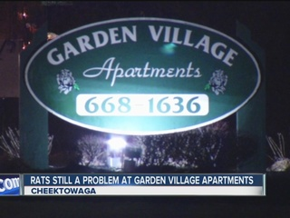 Landlord to fix Cheektowaga rat infestation