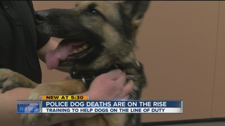 Training to save dogs in the line of duty