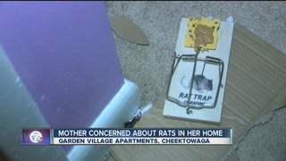 Mother concerned about rat problem in her home