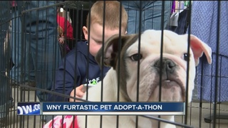 17 animal agencies hold first ever adopt-a-thon