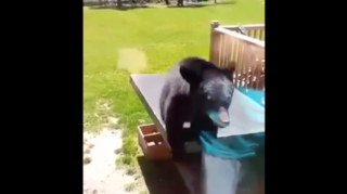 WATCH: Bear cub jumps off table into window