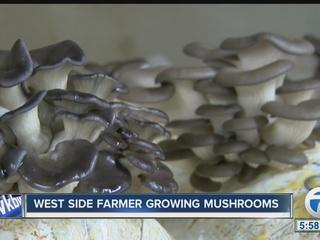 Mushroom farm in a warehouse on the West Side