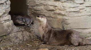 Another Otter-ly wonderful edition at BuffaloZoo