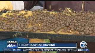 Honey business buzzing in WNY