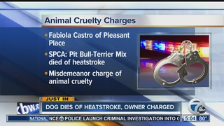 Dog dies from heatstroke, owner charged
