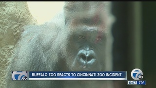Buffalo Zoo reacts to Cincinnati incident