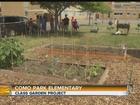 Como Park Elementary Garden