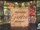 Melinda's Garden in July