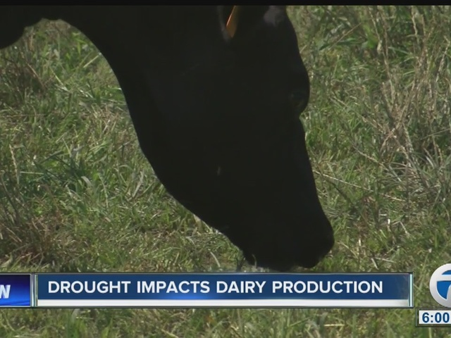 Drought impacts local dairy farmers
