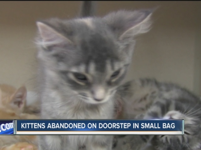 Kittens abandoned on doorstep in small duffel bag
