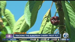 European fruit fly concerns Niagara Co. farmers