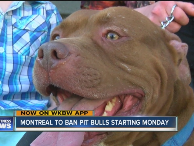 Montreal passes controversial ban on pit bulls