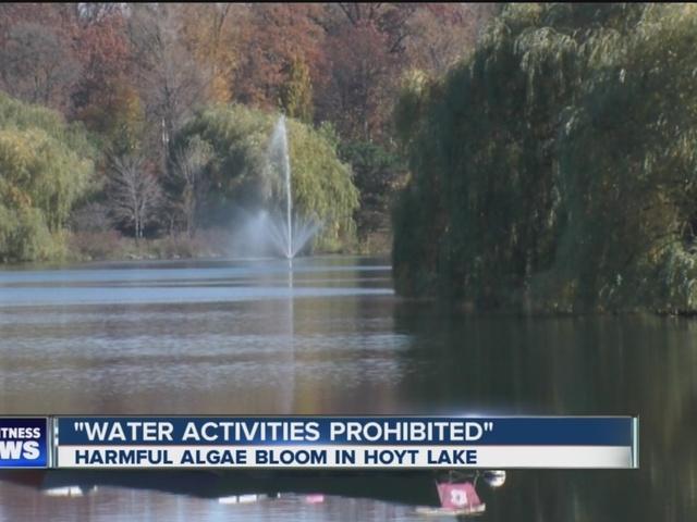 Harmful algae bloom confirmed in Hoyt Lake