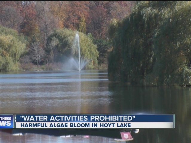 Water activities suspended at hoyt lake due to algae bloom
