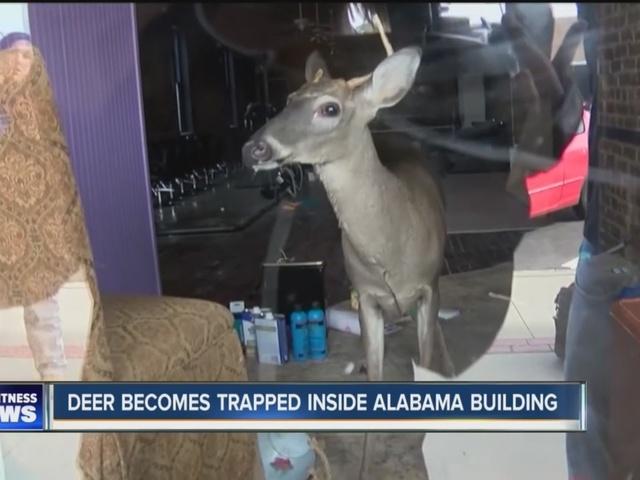 A deer walks into a bar...
