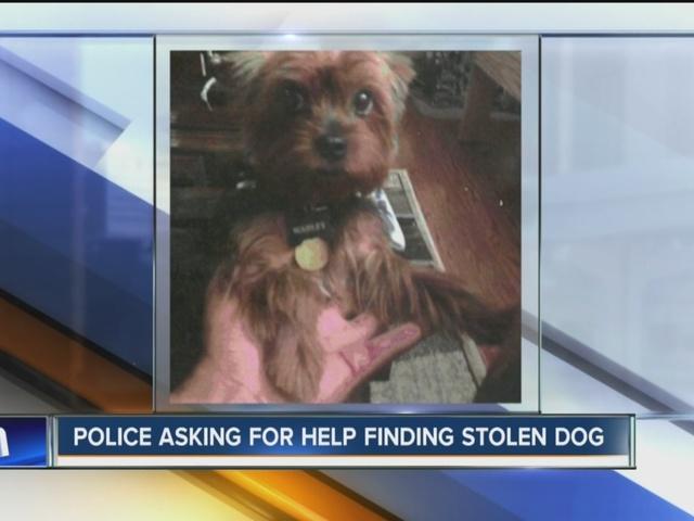 Dog stolen from yard in Tonawanda