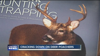 Cracking down on WNY deer poachers