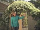 A Garden For All Five Seasons