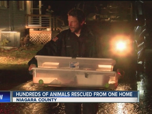 SPCA: dozens of dead animals at Niagara County home