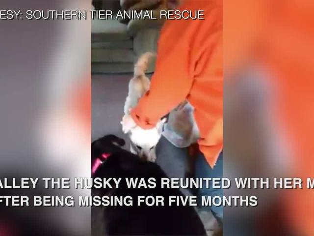 Dog reunited with family
