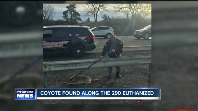 Coyote captured on the 290