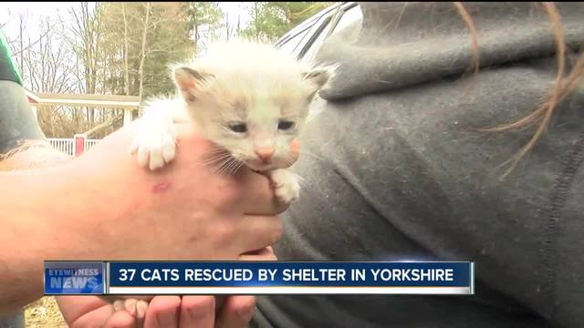 37 cats rescued by Yorkshire shelter