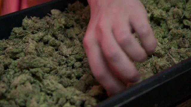 Local biotech company develops -zero THC- marijuana