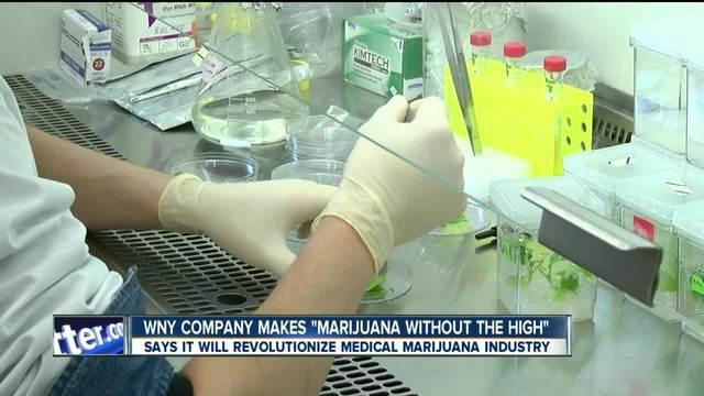 WNY company grows marijuana without the high