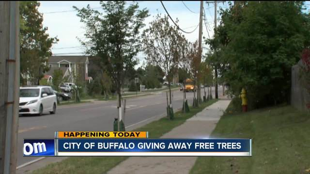 Owatonna named Tree City USA