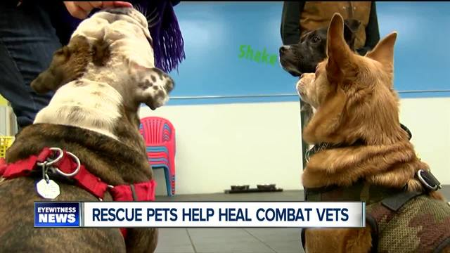 WNY group is healing war vets with rescue pets