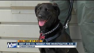 Meet Erie County's newest fire investigator, Axe