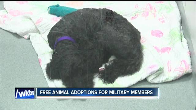 Free animal adoptions for military members at SPCA