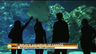 Ripleys's Aquarium of Canada