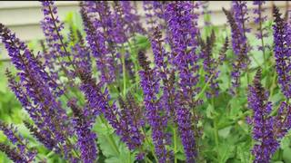 How To Keep Your Flowers Blooming Longer With...