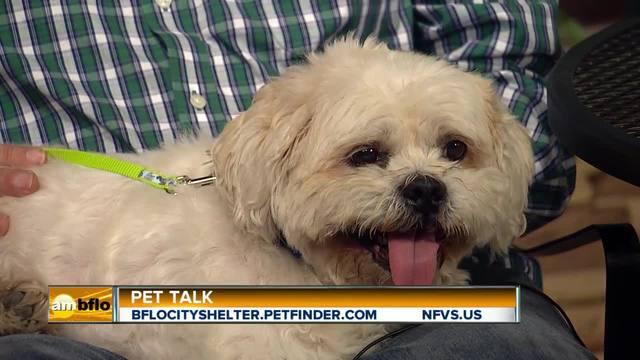 Pet Talk Tuesday - Fleas