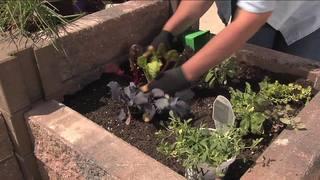 Melindas Garden Moment - Gardening Under Black W