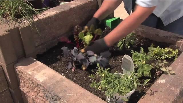Melindas Garden Moment-Gardening under Black Walnut Trees