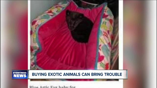 Buying exotic animals can bring trouble