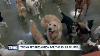 How to Keep Pets Safe During the Solar Eclipse