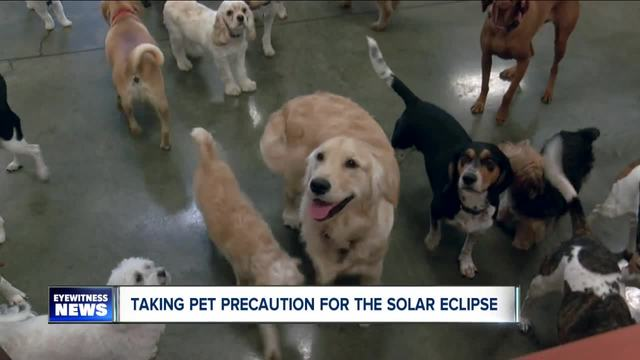 Pet Safety during Solar Eclipse