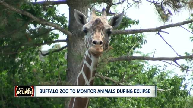 Buffalo Zoo and the eclipse
