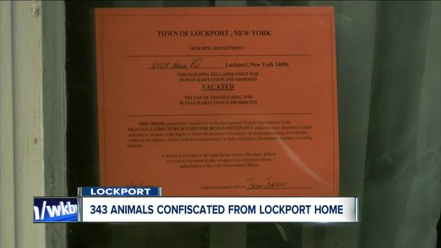Possible animal cruelty in Lockport