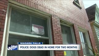 Dogs found dead inside metal crates in the Falls