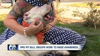 Is Buffalo a Pit Bull friendly city?