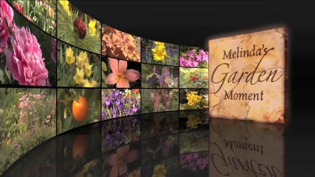 Melinda-s Garden Moment- Plan and Plant for Seasonal Interest in the Garden