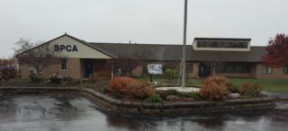 Contagious illness breaks out at Niagara SPCA
