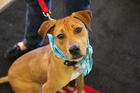 SPCA offers free adoptions for military families